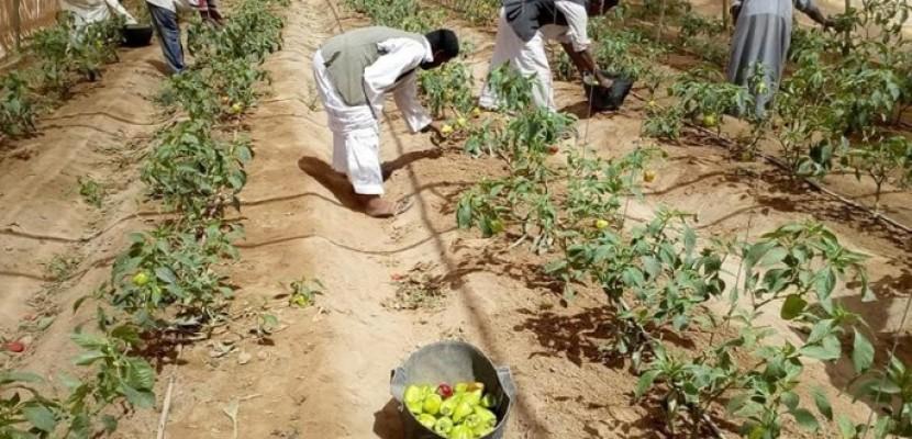الزراعة: خسائر المزارعين بسبب رش مبيدات الاحتلال مليون وربع المليون دولار
