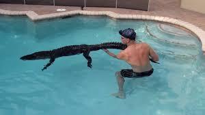 5 دقائق مرعبة لرجل يخرج تمساحاً من المسبح بيديه (شاهد)