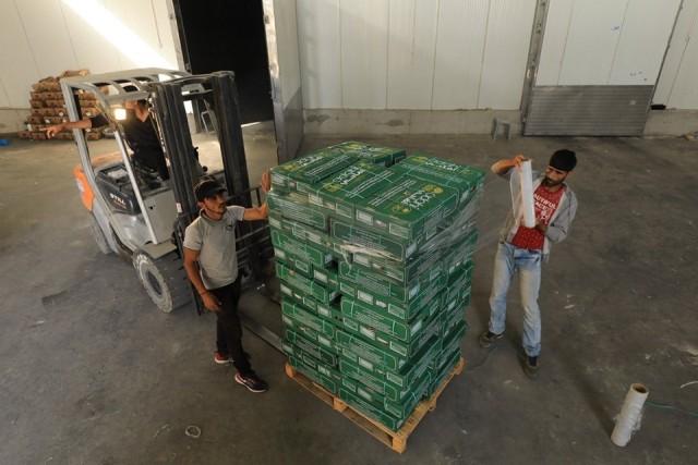 غزة: بدء عملية توزيع لحوم الهدي والأضاحي السعودية للمحتاجين