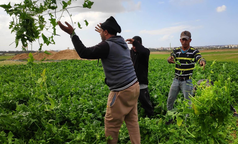 نقابات العمال: 25 ألف مزارع بغزة تأثروا من كورونا