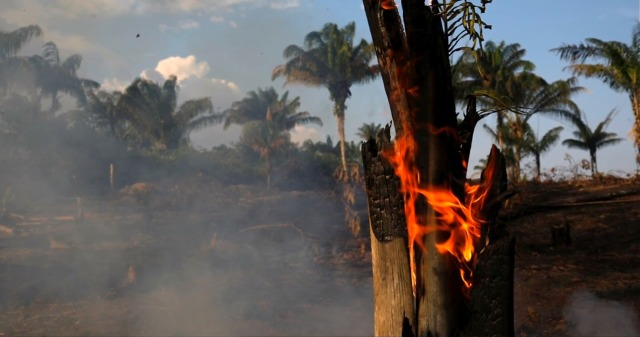 حرائق غابات الأمازون ومدى تأثيرها على الحياة البشرية