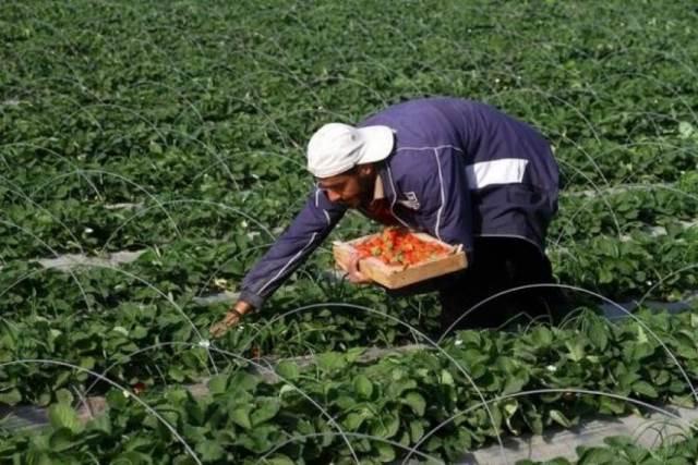غزة : الزراعة تقدر الأضرار الزراعية خلال العدوان الأخير