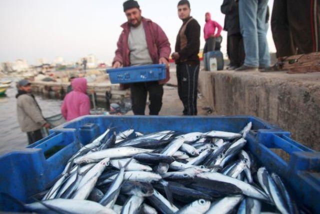غزة : الزراعة والاقتصاد توضحان عملية تسويق الأسماك للخارج