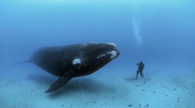 العلماء يكتشفون سر أكبر كائن على الأرض