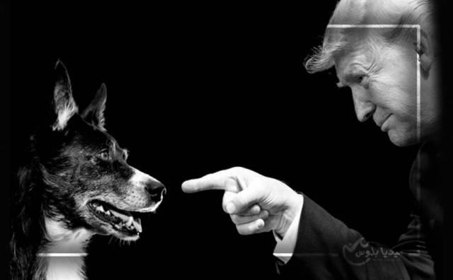 ترامب يستضيف الكلب الذي شارك بعملية قتل البغدادي