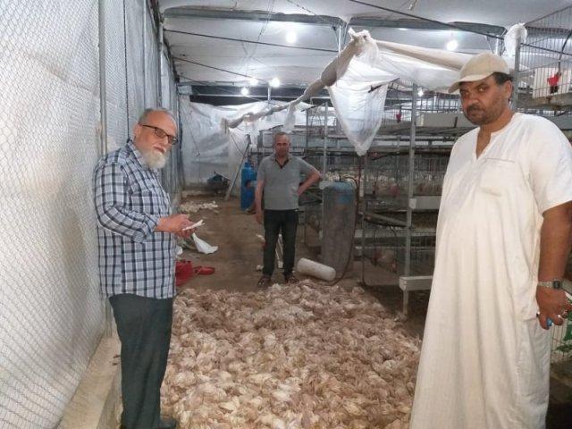 غزة : أضرار قطاع الدواجن نتيجة المرتفع الجوي بلغت نصف مليون دولار