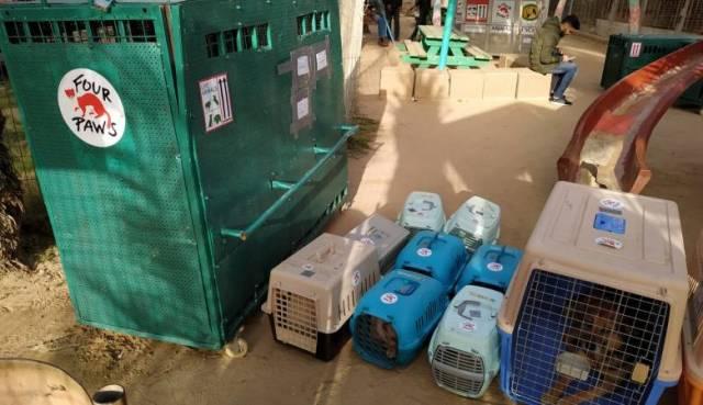 غزة : نقل 40 حيوانًا وطائرًا للأردن لقلة الإمكانيات