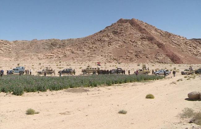 الحكومة المصرية تحظر التجوال في سيناء