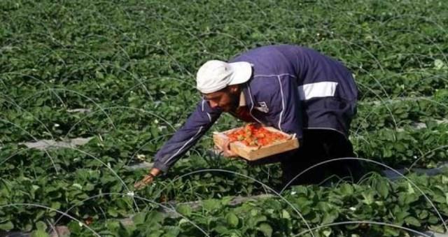 الاحتلال يبدأ منع تصدير المنتجات الزراعية الفلسطينية عبر الأردن