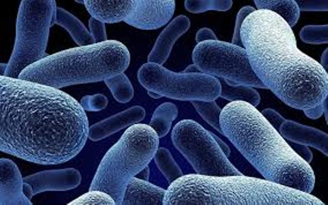 طريقة غريبة لمكافحة البكتيريا